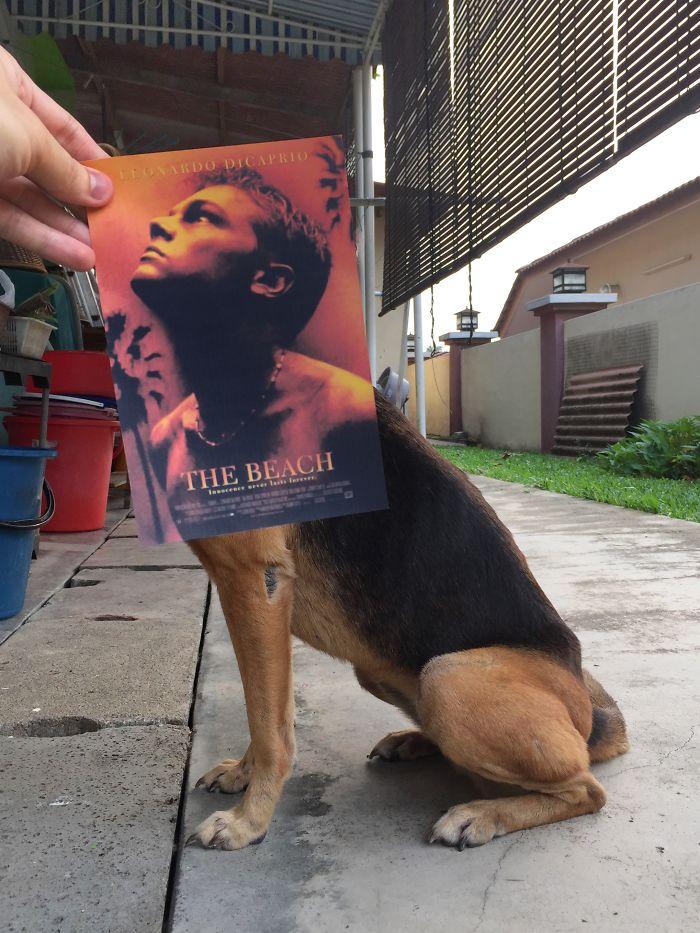 movie-posters-recreations-real-puppies-mashups-jaemy-choong-10
