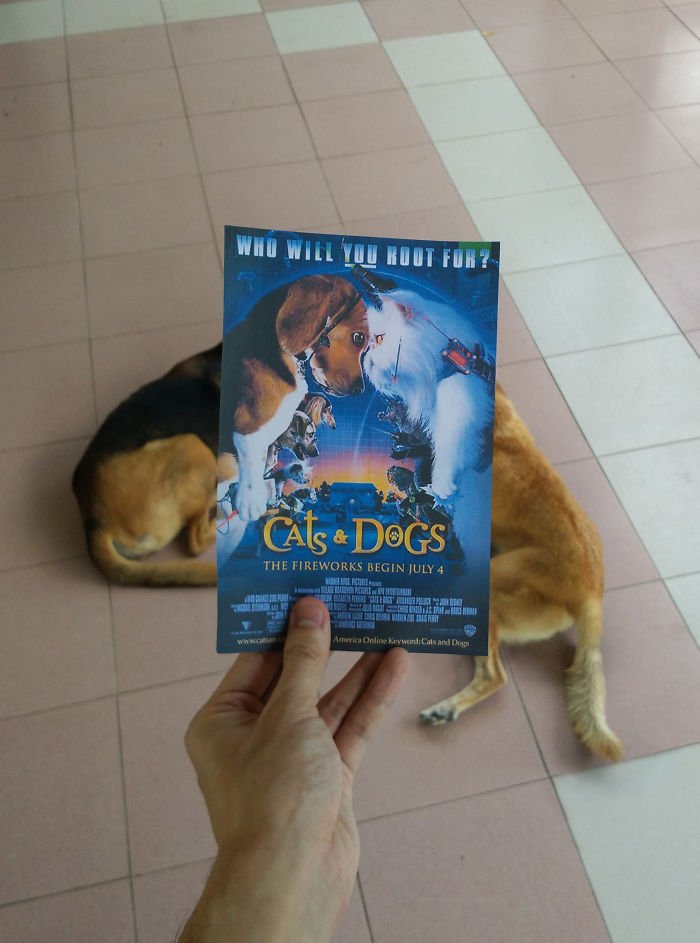 movie-posters-recreations-real-puppies-mashups-jaemy-choong-11