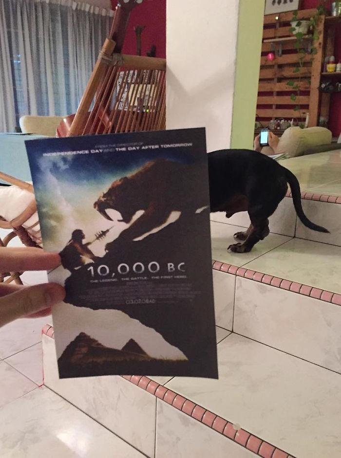 movie-posters-recreations-real-puppies-mashups-jaemy-choong-12