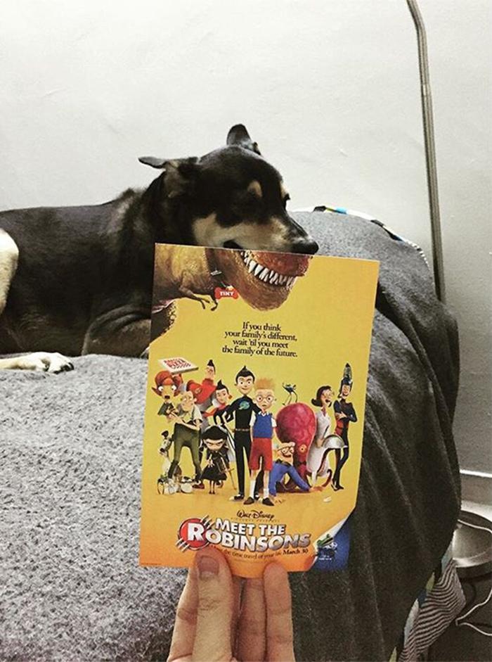 movie-posters-recreations-real-puppies-mashups-jaemy-choong-13