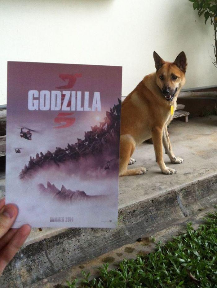 movie-posters-recreations-real-puppies-mashups-jaemy-choong-2