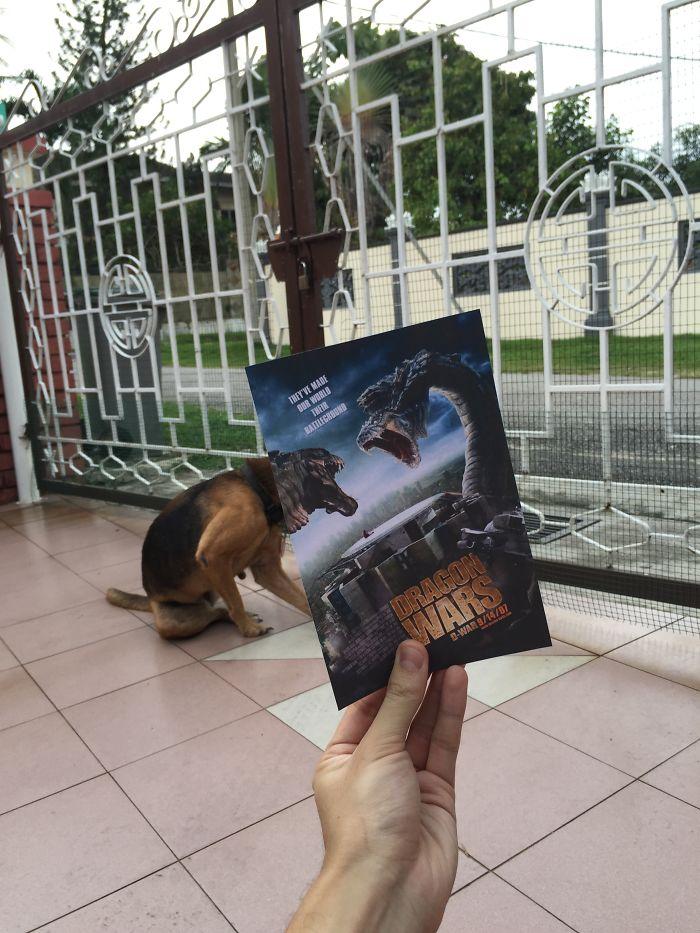 movie-posters-recreations-real-puppies-mashups-jaemy-choong-6