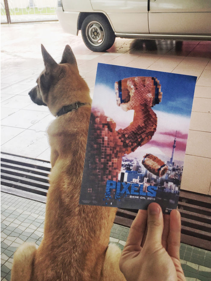 movie-posters-recreations-real-puppies-mashups-jaemy-choong-7