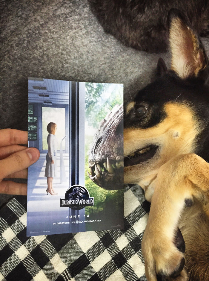 movie-posters-recreations-real-puppies-mashups-jaemy-choong-8