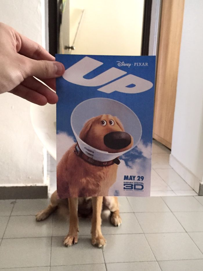 movie-posters-recreations-real-puppies-mashups-jaemy-choong-9