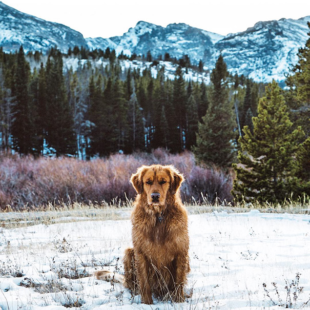 travelling-dog-aspen-hunter-lawrence-5