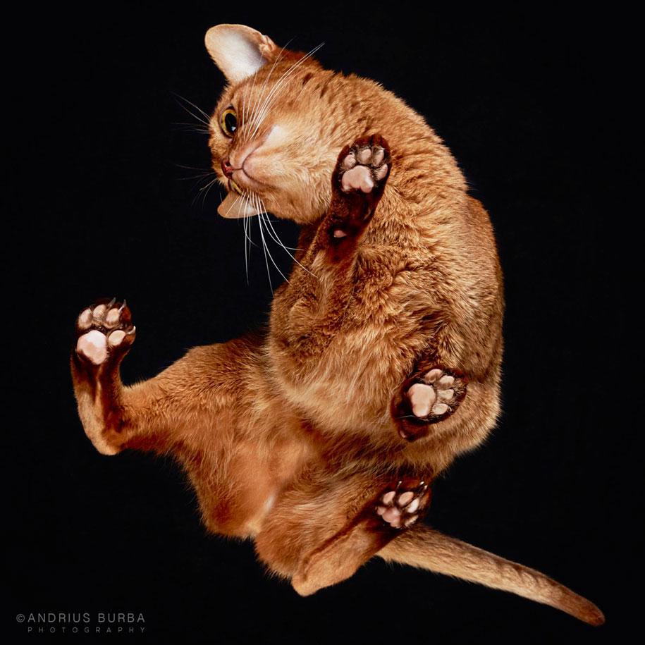 underneath-cat-photographs-undercats-andrius-burba-1