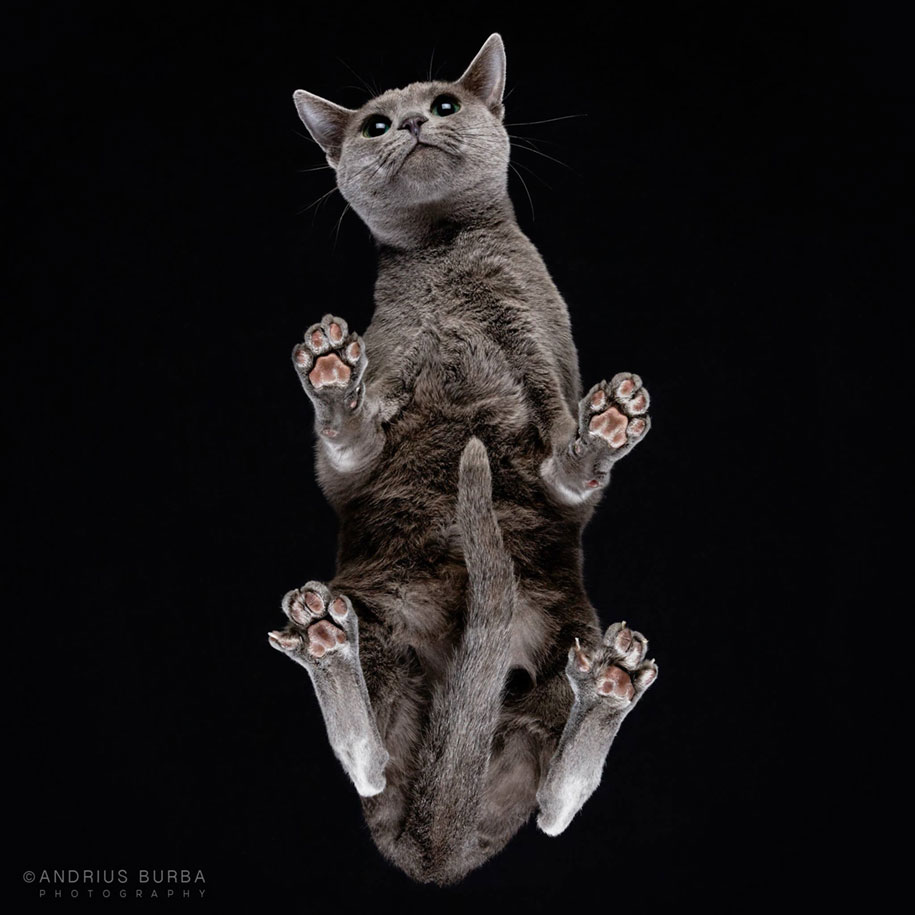 underneath-cat-photographs-undercats-andrius-burba-18