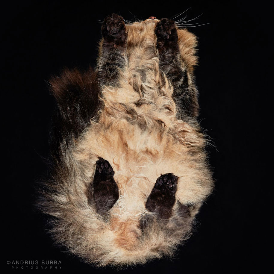 underneath-cat-photographs-undercats-andrius-burba-21