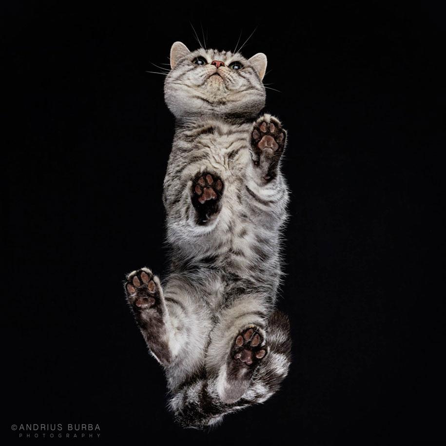 underneath-cat-photographs-undercats-andrius-burba-25