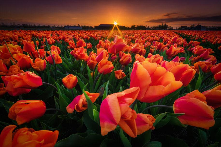 -amazing-netherland-photgraphy-albert-dros-12