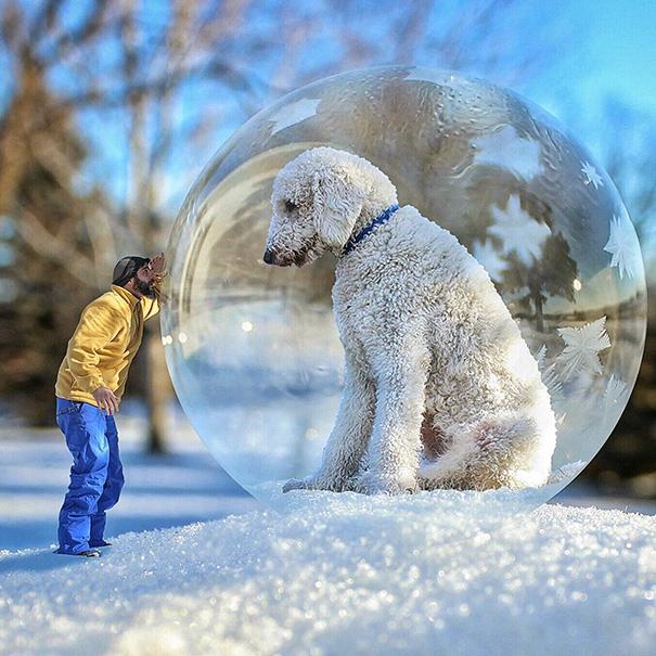 dog-giant-roams-streets-photoshop-juji-christopher-cline-1
