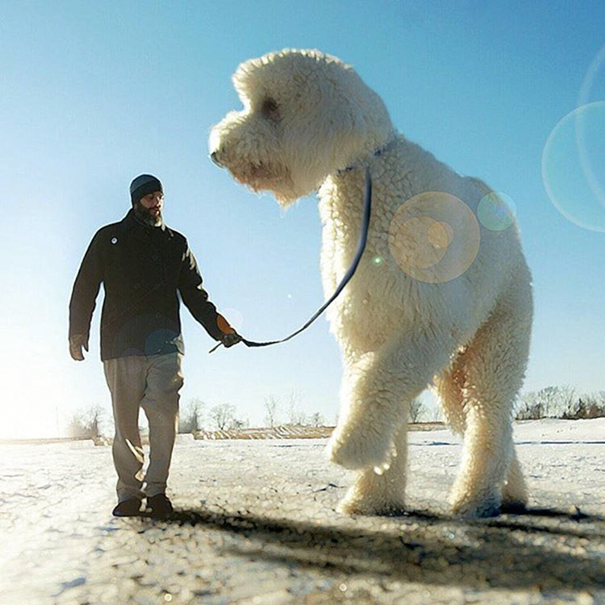 dog-giant-roams-streets-photoshop-juji-christopher-cline-11