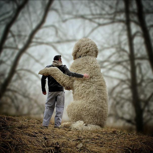 dog-giant-roams-streets-photoshop-juji-christopher-cline-2