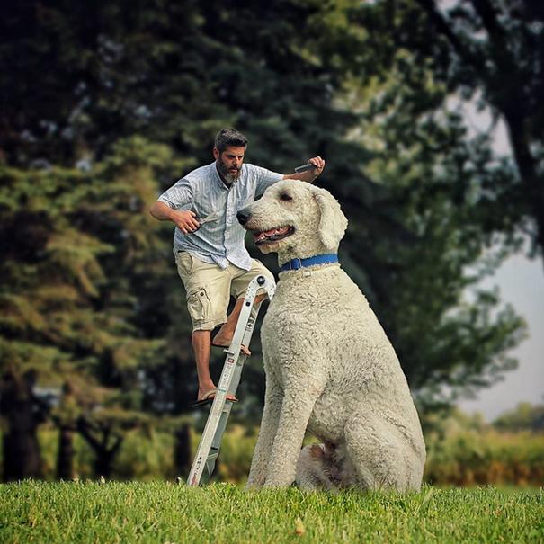 dog-giant-roams-streets-photoshop-juji-christopher-cline-22