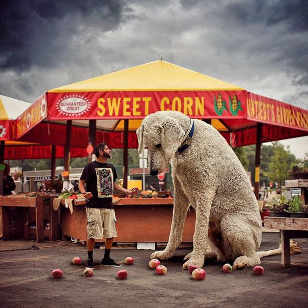 dog-giant-roams-streets-photoshop-juji-christopher-cline-23
