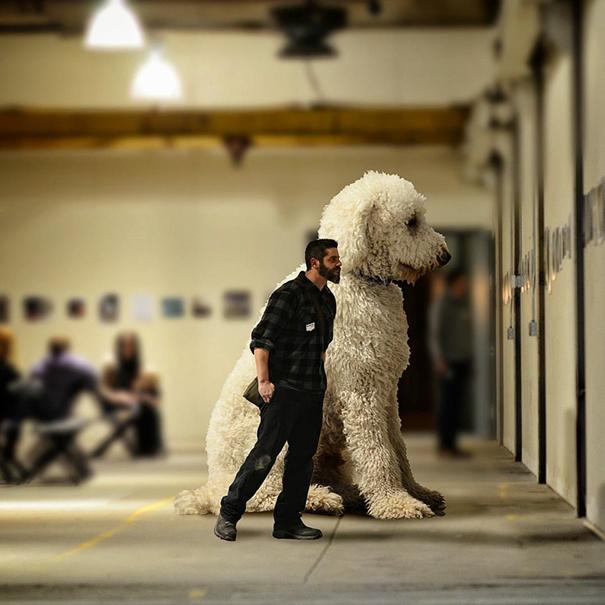 dog-giant-roams-streets-photoshop-juji-christopher-cline-27