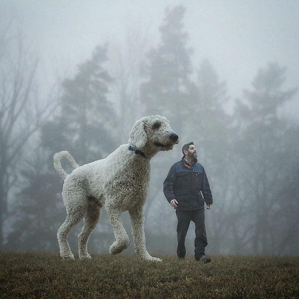 dog-giant-roams-streets-photoshop-juji-christopher-cline-32