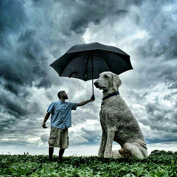 dog-giant-roams-streets-photoshop-juji-christopher-cline-6