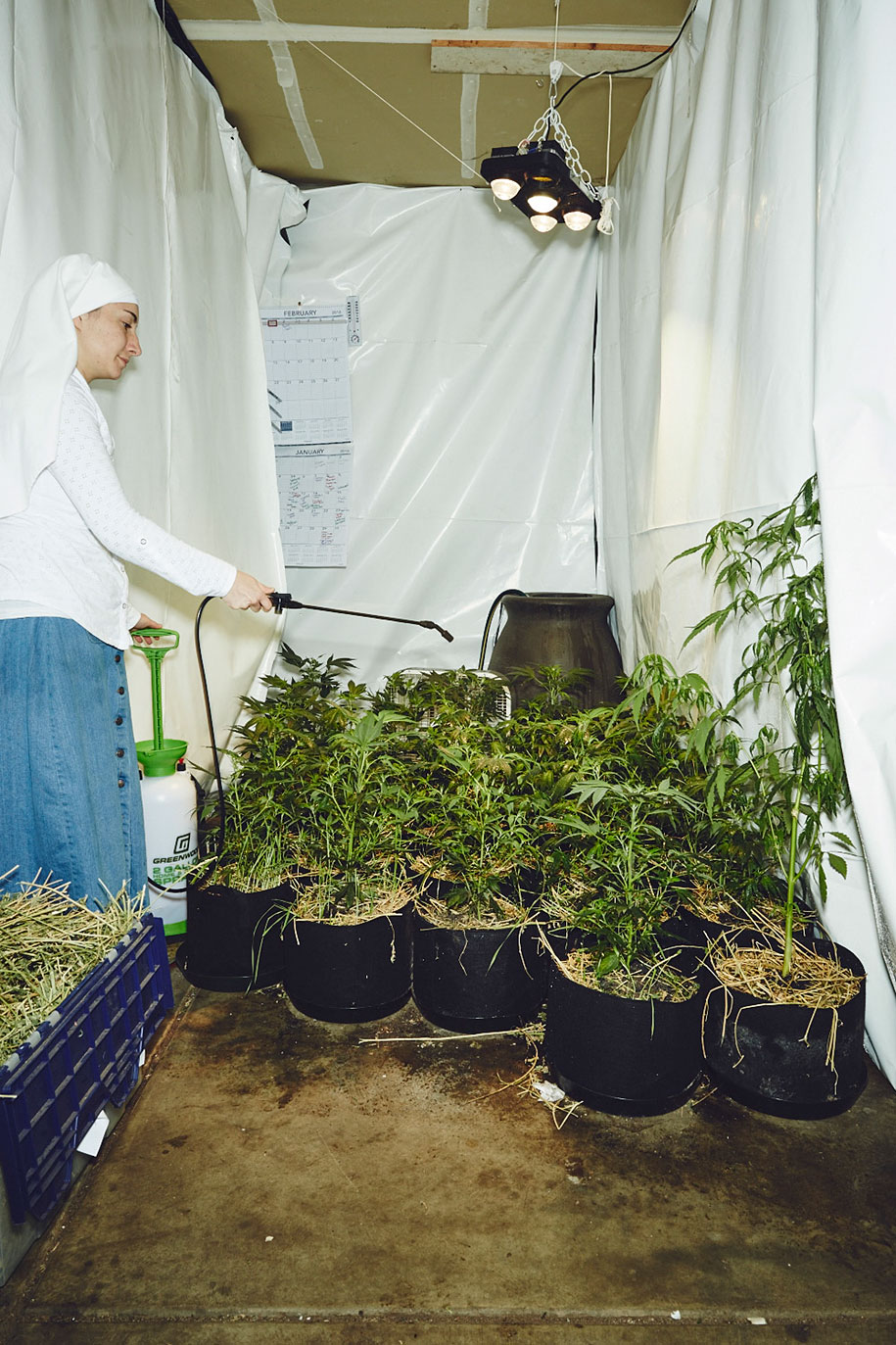 marijuana-horticulture-sisters-of-the-valley-shaughn-crawford-john-dubois-27