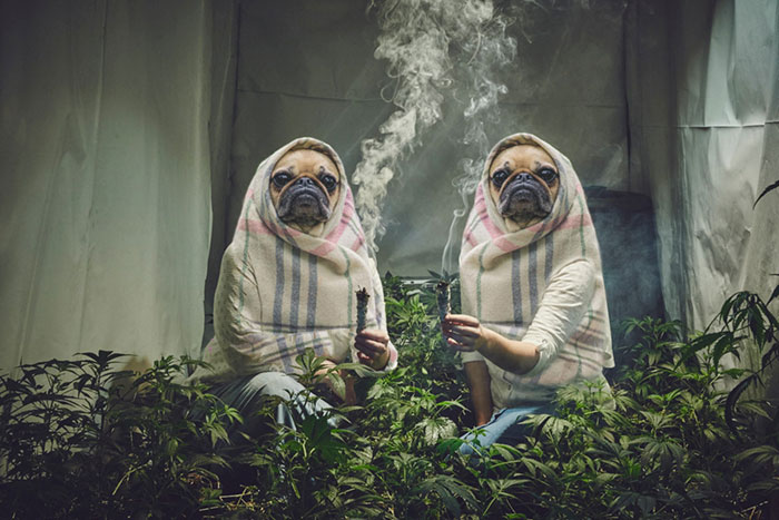 photoshop-trolls-weed-smoking-nuns-3