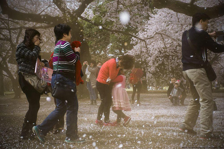 spring-colors-japan-cherry-blossoms-national-geographic-12