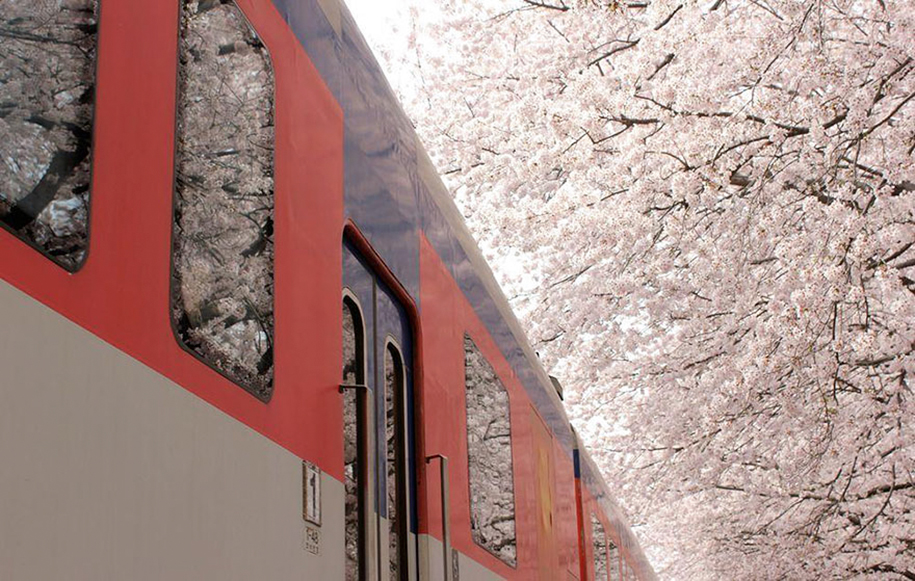 spring-colors-japan-cherry-blossoms-national-geographic-15