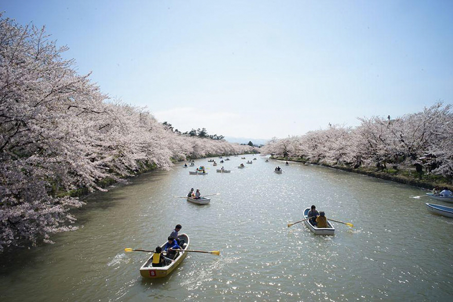 spring-colors-japan-cherry-blossoms-national-geographic-5