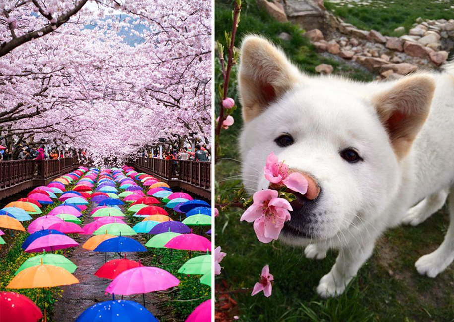 spring-colors-japan-cherry-blossoms-national-geographic-6