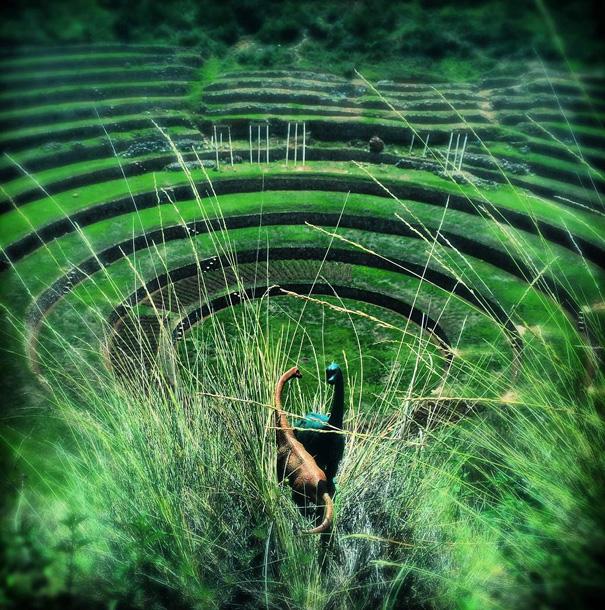travel-photography-optical-illusions-dinosaur-toys-dinodinaseries-jorge-saenz-5