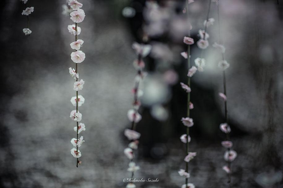 trees-blooming-spring-in-japan-hidenobu-suzuki -11