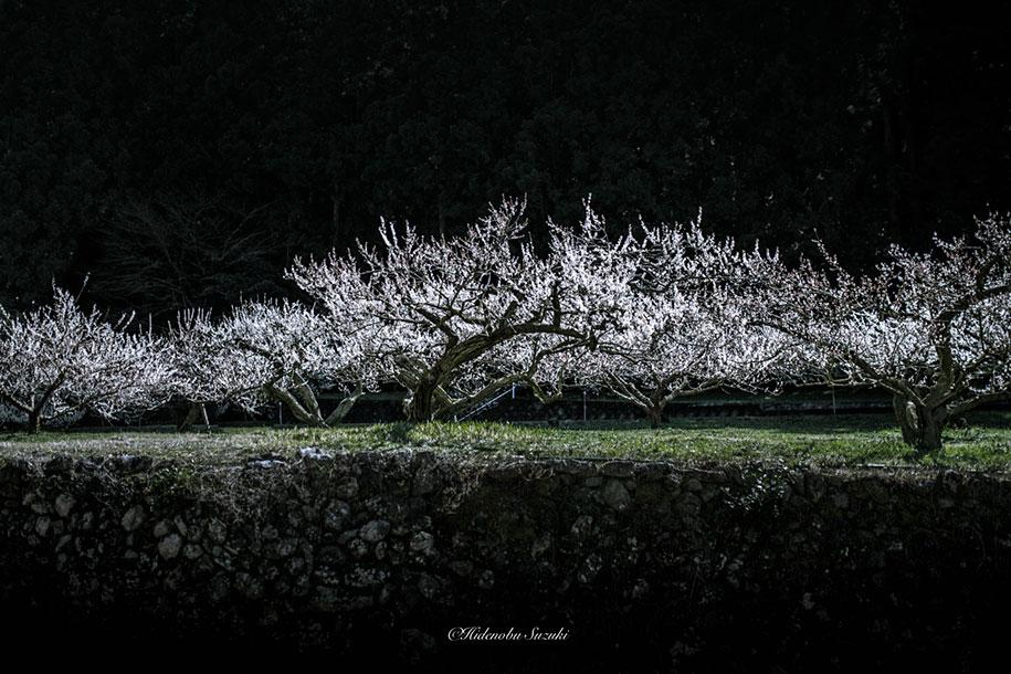 trees-blooming-spring-in-japan-hidenobu-suzuki -12