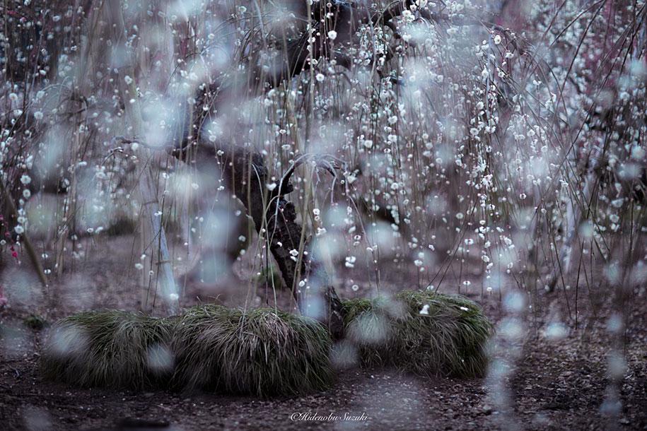 trees-blooming-spring-in-japan-hidenobu-suzuki -14
