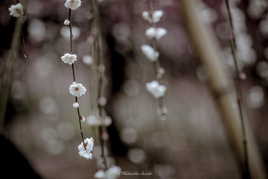 trees-blooming-spring-in-japan-hidenobu-suzuki -9