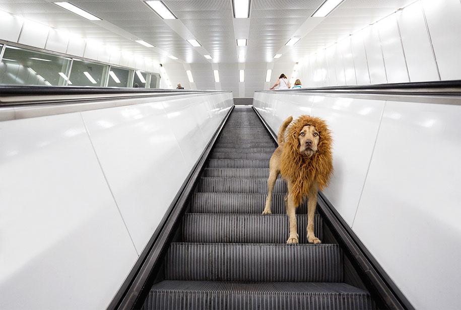 dog-turned-into-lion-julia-marie-werner-1