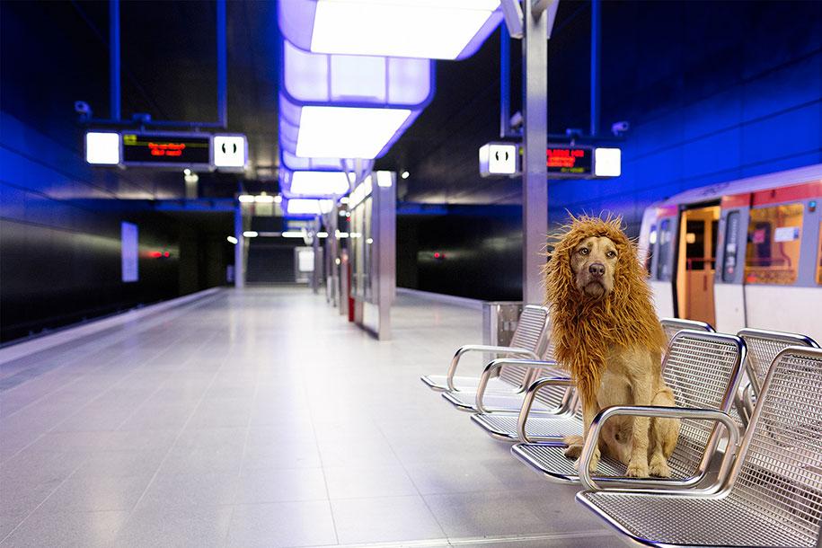 dog-turned-into-lion-julia-marie-werner-10