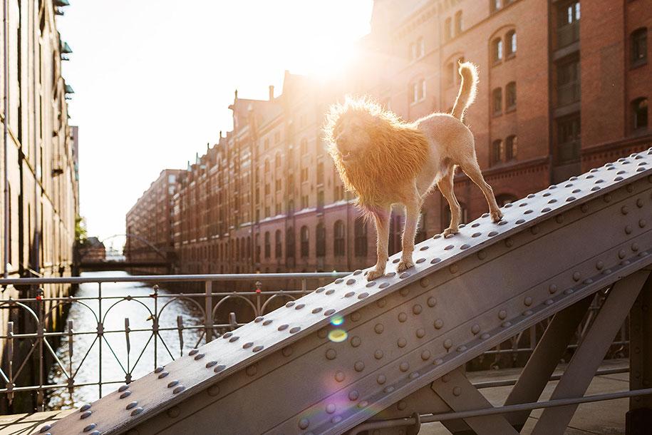 dog-turned-into-lion-julia-marie-werner-11