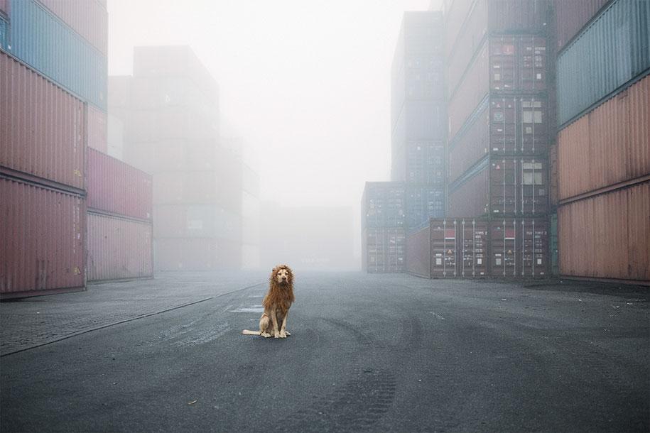 dog-turned-into-lion-julia-marie-werner-15