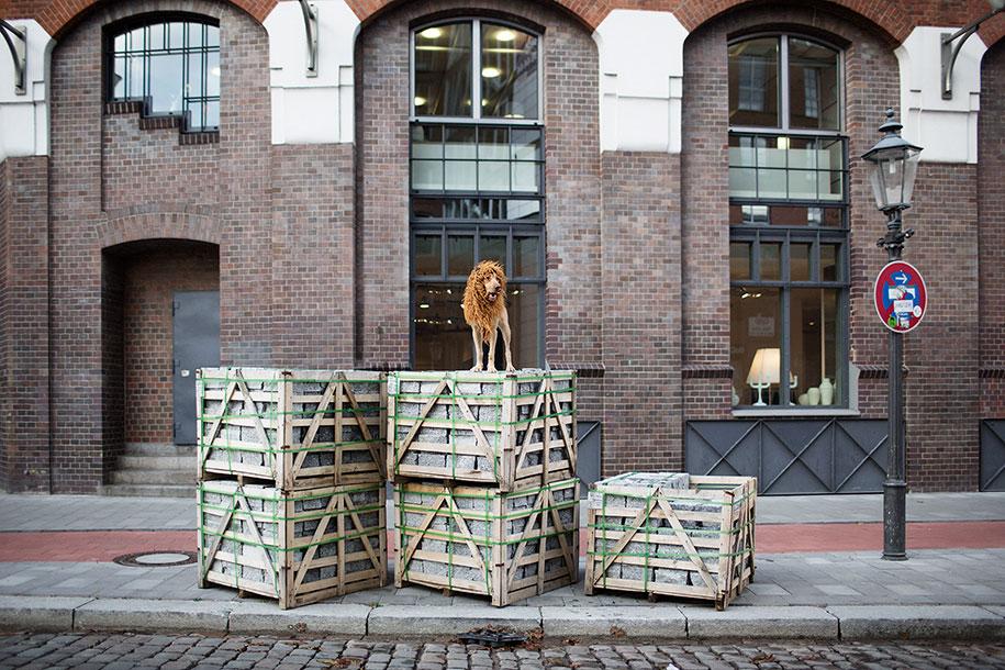 dog-turned-into-lion-julia-marie-werner-4