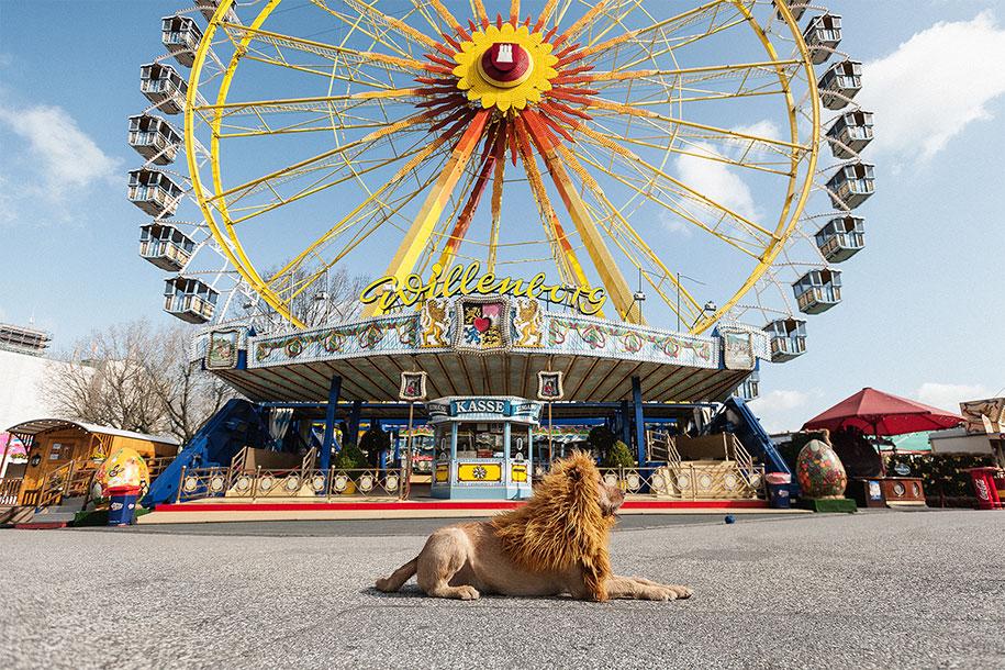 dog-turned-into-lion-julia-marie-werner-8