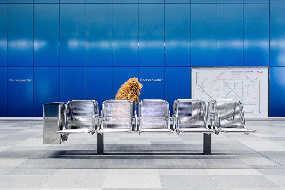 dog-turned-into-lion-julia-marie-werner-9