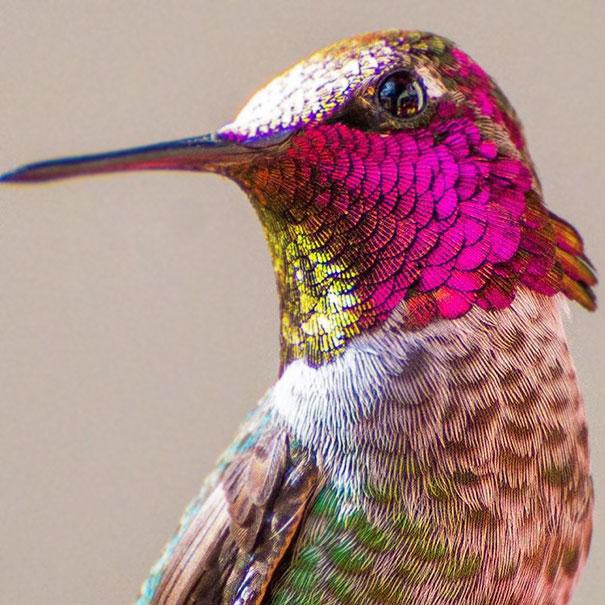 hummingbird-closeup-photography-tracy-johnson-california-6