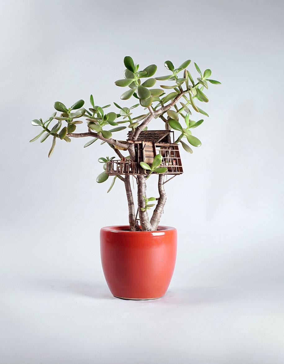 miniature-treehouse-houseplants-jedediah-corwyn-voltz-17