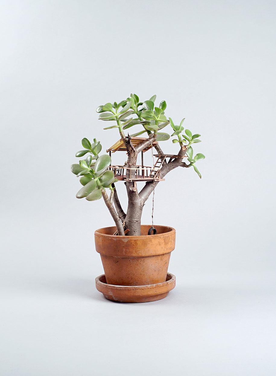 miniature-treehouse-houseplants-jedediah-corwyn-voltz-23