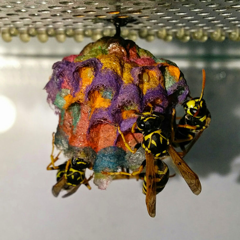 wasps-make-rainbow-nests-from-colored-paper-mattia-menchetti-3