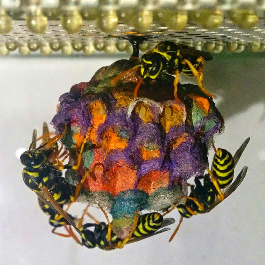 wasps-make-rainbow-nests-from-colored-paper-mattia-menchetti-4