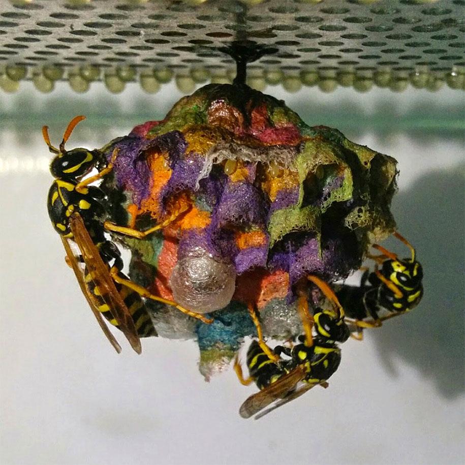 wasps-make-rainbow-nests-from-colored-paper-mattia-menchetti-5