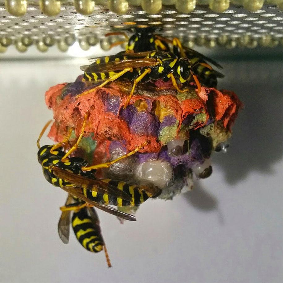 wasps-make-rainbow-nests-from-colored-paper-mattia-menchetti-6