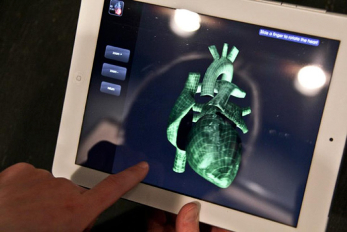 anatomical-wire-sculptures-heart-anne-mondro-7