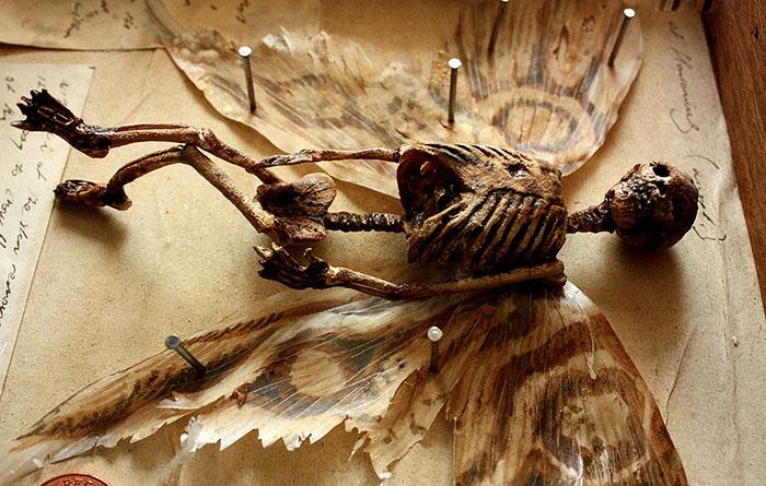 mysterious-skulls-skeletons-thomas-theodore-merrylin-home-london-10